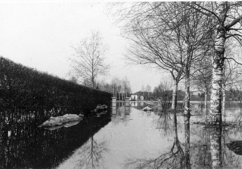 Vuodelta 1957 kuva taloltamme Vanhankyläntielle johtavalta hiekkatieltä ennen säännöstelypadon rakentamista. Kahden viikon ajan vain veneellä saattoi kulkea pihasta tielle.